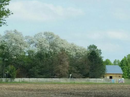Honey Locust Farm